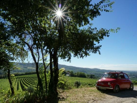 Weingarten oberhalb Verona