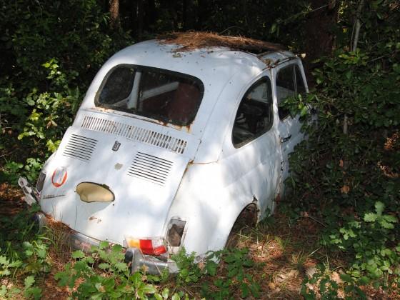 RIP ..... in der Toskana (Iesa, Lama)